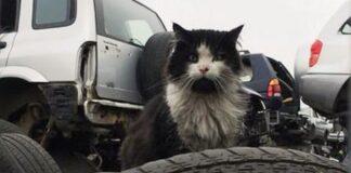 jess gatto discarica