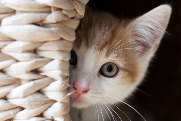 gattino che ha paura delle persone