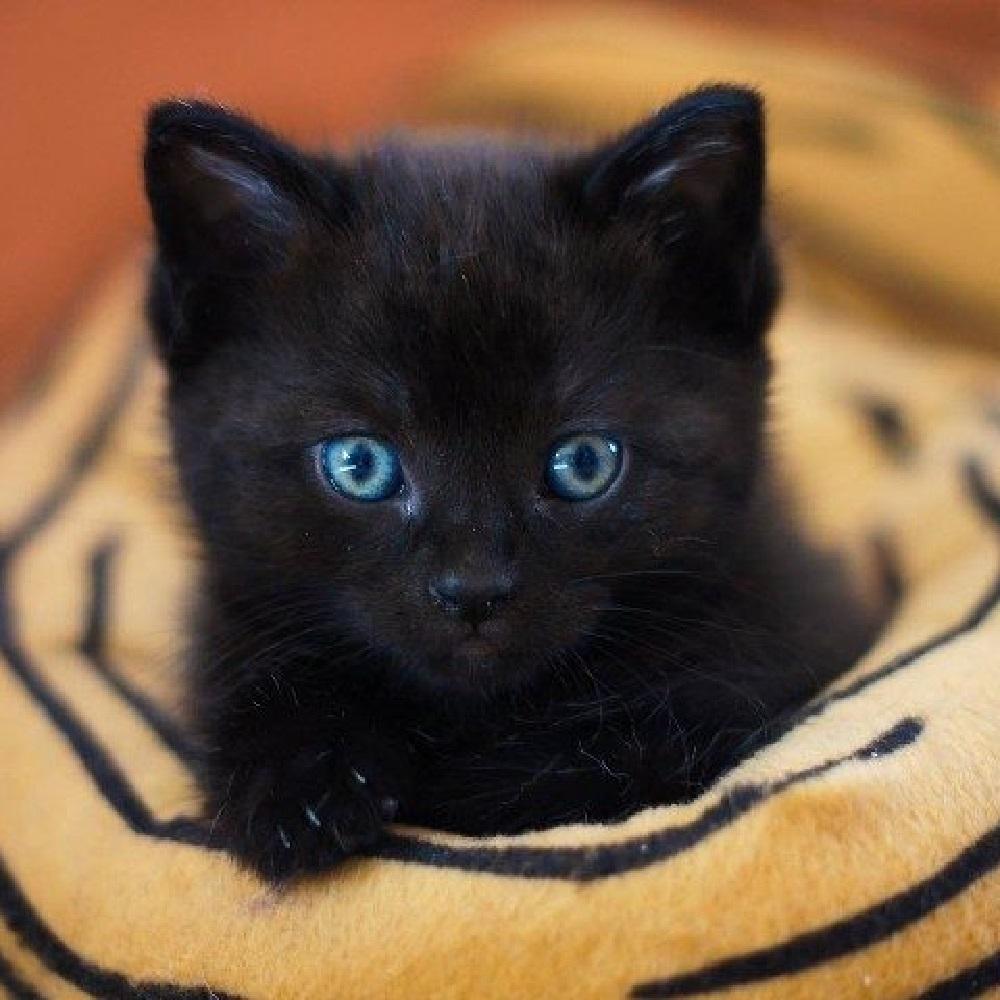 eve gatta finalmente pronta adozione