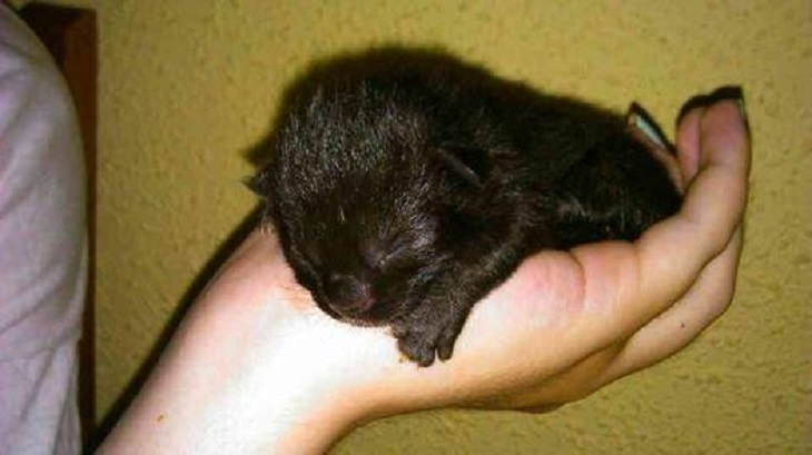 eve gattina recente nascita salvataggio