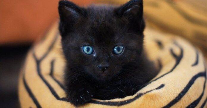 eve gattina abbandonata parco salvata valorosa agente di polizia