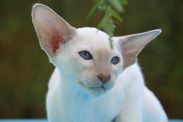 gatto incuriosito dal mondo
