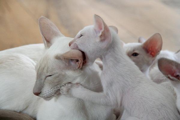 mamma gatto e cuccioli si fanno le coccole