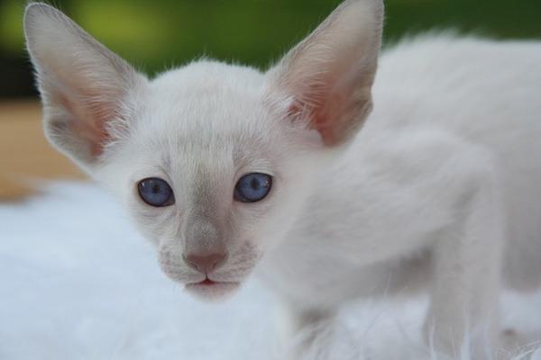 gatto con occhi curiosi