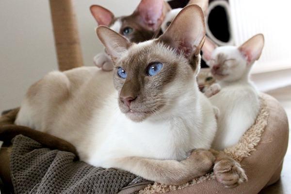 mamma gatto con cuccioli
