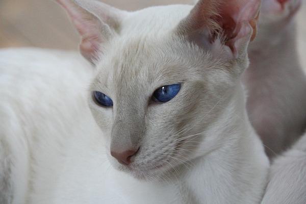 gatto atteggiamento curioso