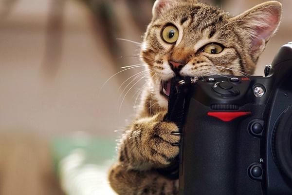 gatto morde una fotocamera