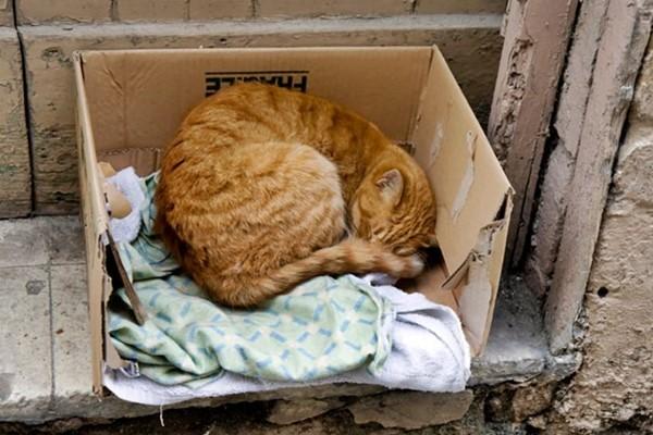 gatto abbandonato in una scatola di cartone