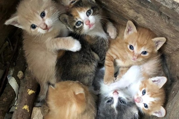 cuccioli di gatto abbandonati