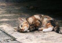 gattino abbandonato in strada
