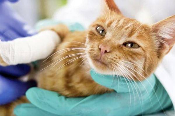 visita dal veterinario