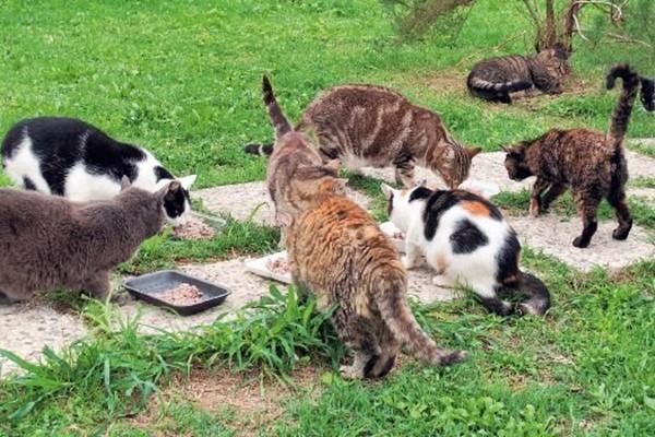 gattile comunale o municipale