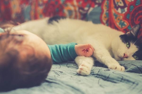 gatto dorme con il neonato