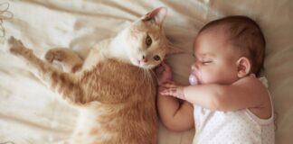 gatto che dorme con un bimbo
