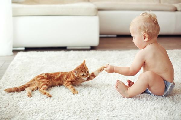 bimbo gioca con un gattino