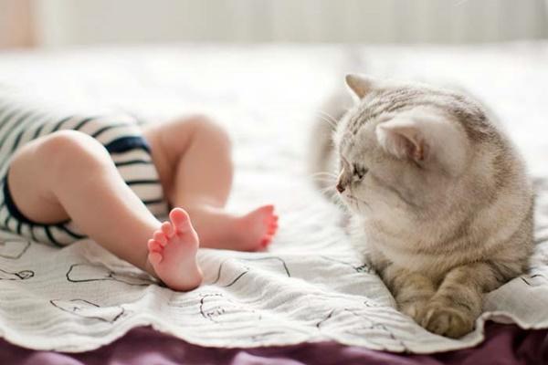 gatto che guarda i piedi del bambino
