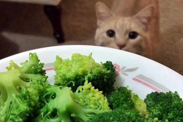 gatto che guarda il piatto con le verdure