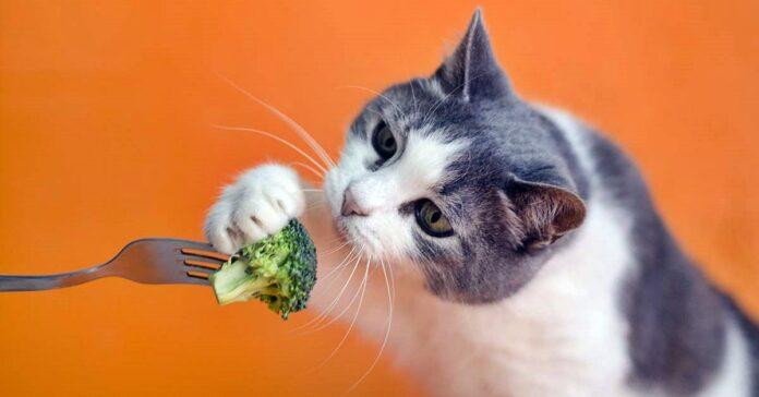 gatto che assaggia i broccoli