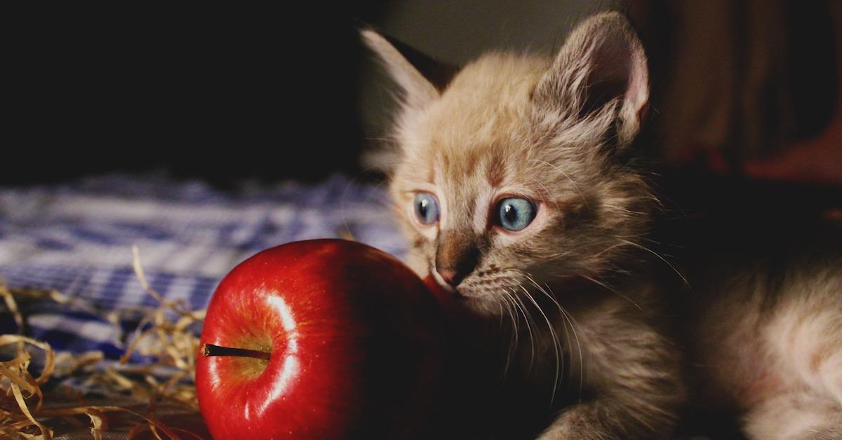 Gattino con mela