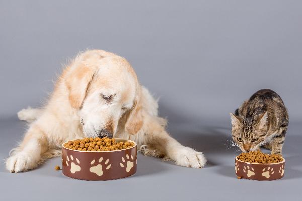 cane e gattino su sfondo grigio