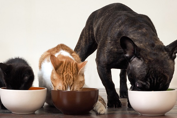 un cane un gatto e un gattino mangiano