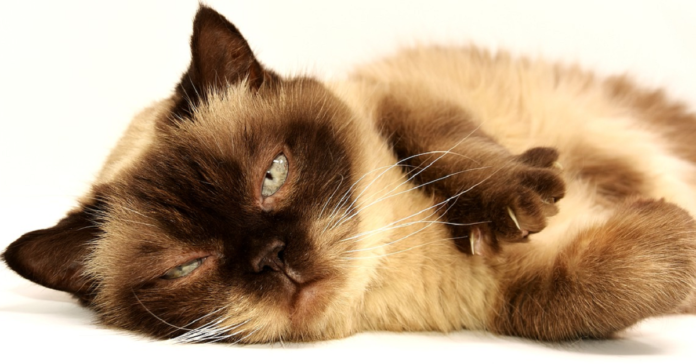gatto che riposa