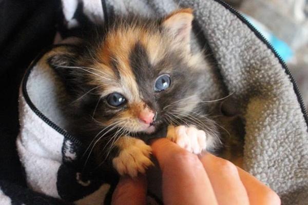 fare le coccole al gattino piccolo
