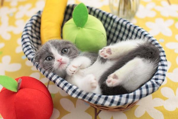 gattino monello che gioca con un cestino