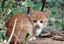 gattino nascosto sotto a una pianta