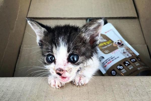 gattino dentro a una scatola
