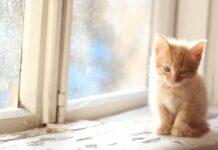 gattino davanti a finestra