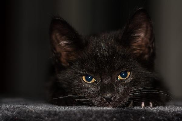 gattino sguardo perplesso