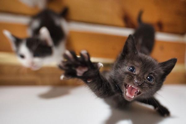 gattini che vogliono giocare
