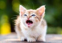 gattino che soffia