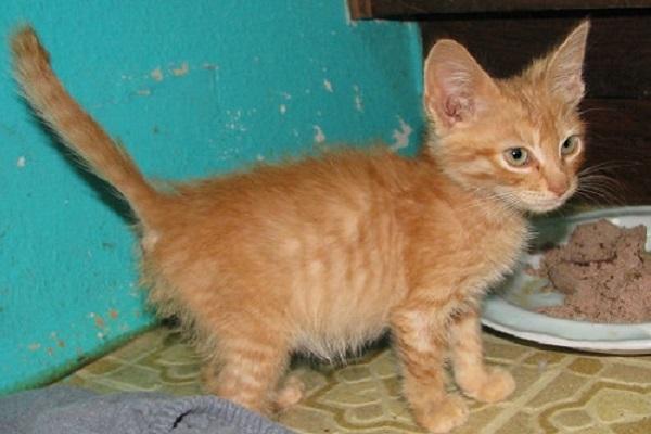gattino con pancia gonfia