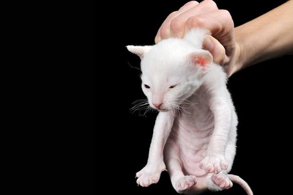 gattino preso dalla collottola