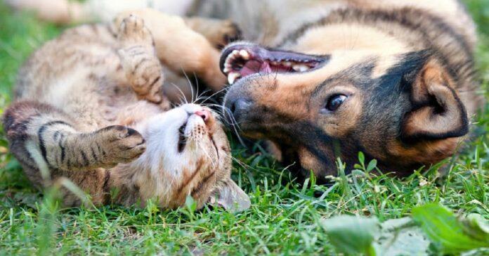 canvivenza cane gatto