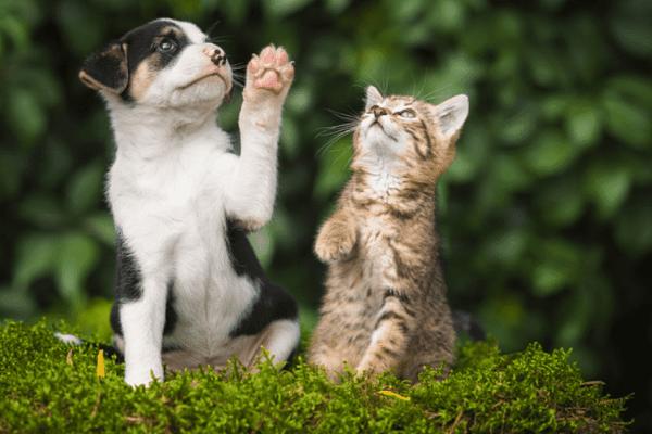 cane e gatto esplorano
