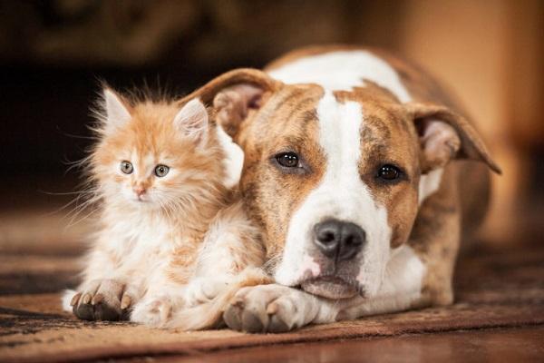 cane accanto a gatto