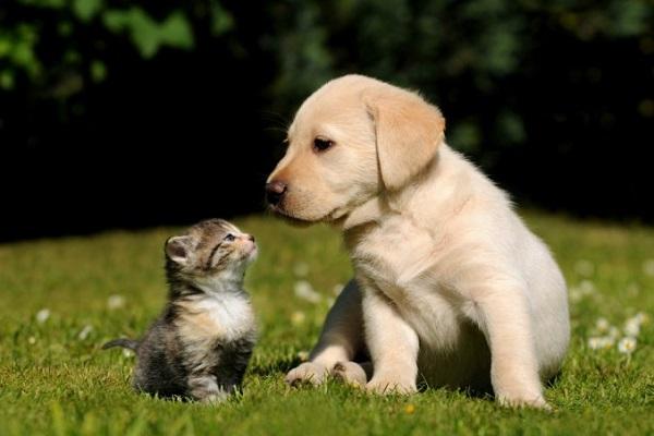 cane incuriosito da gatto