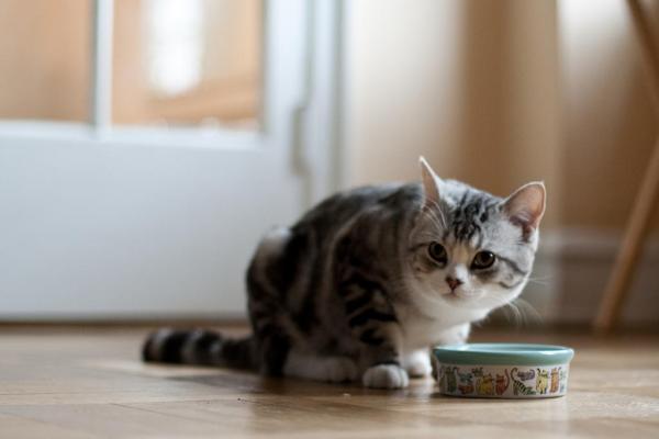 gatto davanti a ciotola
