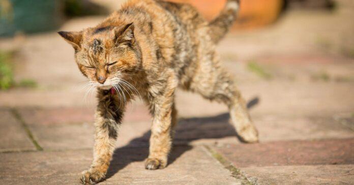 gatto si stiracchia
