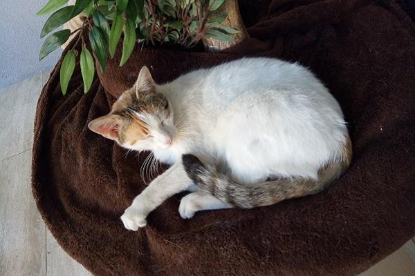 gatto che sta riposando