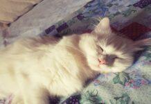 gatto dorme profondo