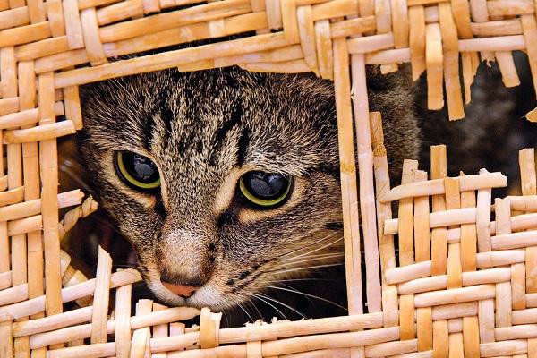 gatto distrugge cesta