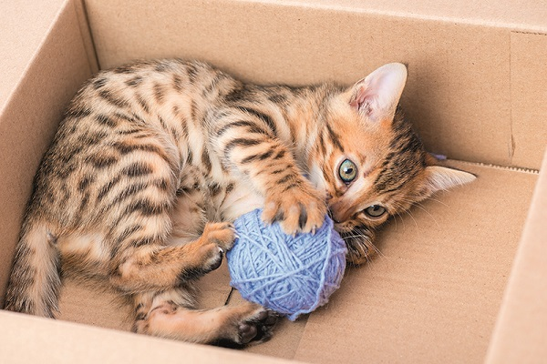 gatto che gioca con gomitolo