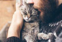 coccolare il gatto