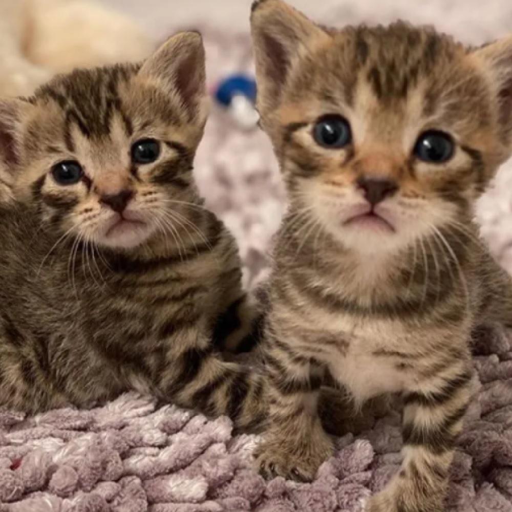 gilligan milli gatti trovano casa