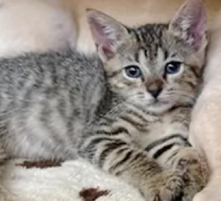 gilligan milli gatto accolto casa