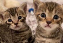 gilligan milli gattini in cerca d'amore